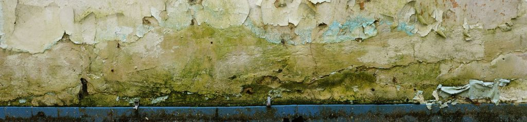 Those 3 Reasons to Remove Mold Immediately