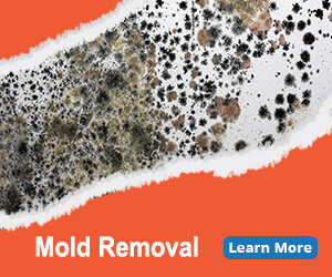 mold damage services