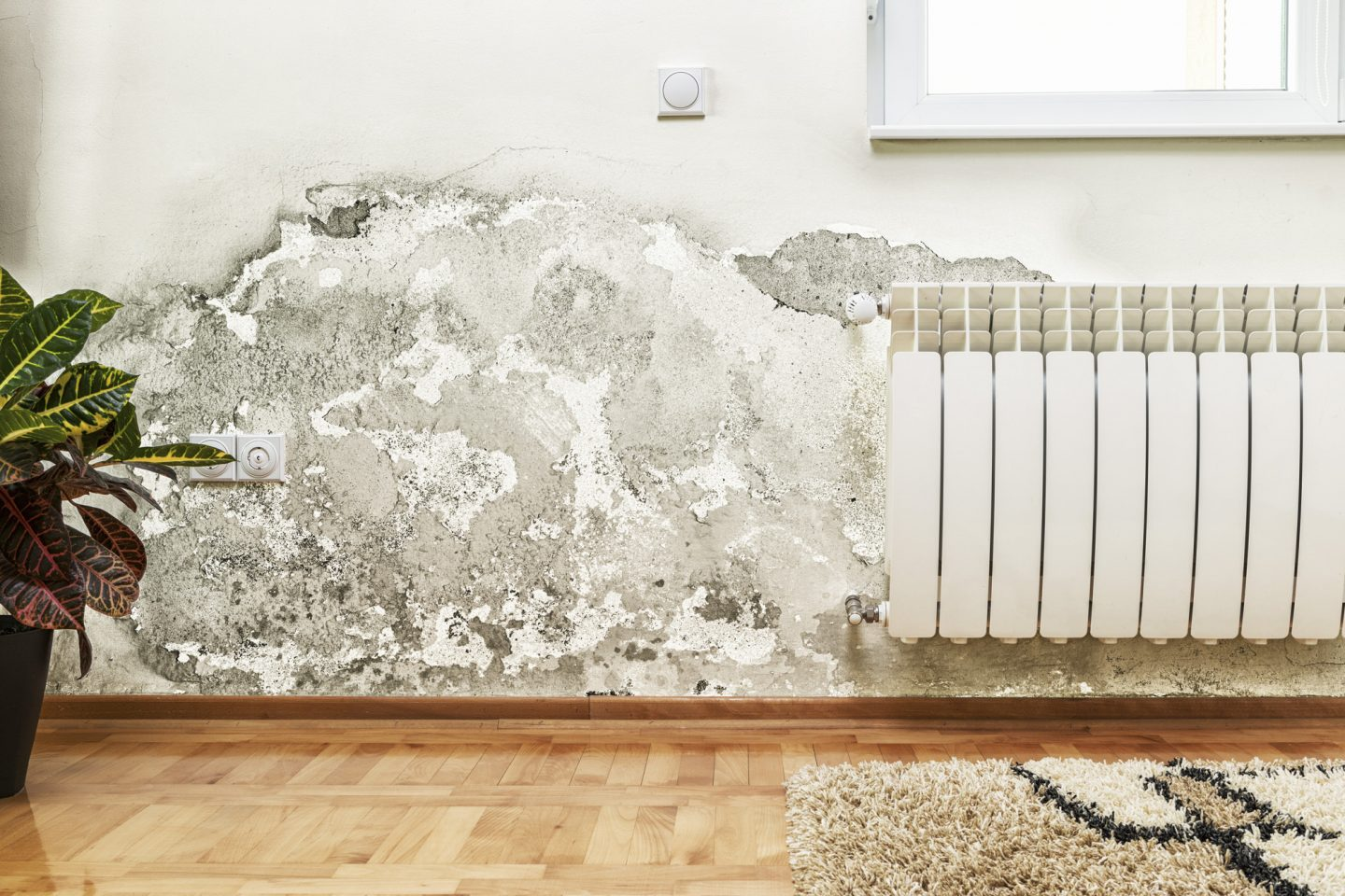 5 Common Signs You Have Mold in Your House